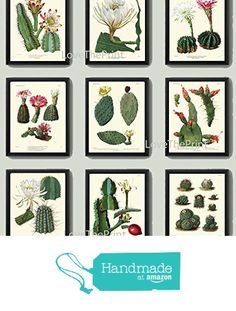 Botanical Print Set of 9 Antique Beautiful Cactus Plant Blooming White Pink Yellow Flowers Tropical Desert Garden Nature Home Room Decor Wall Art Unframed from LoveThePrint https://www.amazon.com/dp/B019FT0ALK/ref=hnd_sw_r_pi_dp_yetFybNCX5QQC #handmadeatamazon
