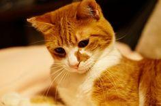 里親さんブログちるちる&エリー。2人一緒がいいんだも~~~ん♪ - http://iyaiya.jp/cat/archives/72697