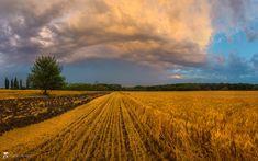 Summer twilight over the field by Фёдор Лашков on 500px