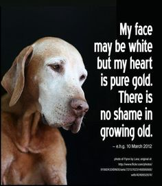 I'm reminded of this every time I look into the eyes of our senior adoptable dogs.