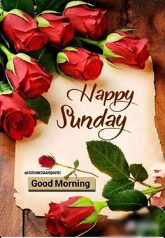 Best Good Morning Status for Love, Friends and Family Happy Sunday Messages, Happy Sunday Images, Good Morning Sunday Images, Sunday Morning Quotes, Happy Good Morning Quotes, Sunday Wishes, Beautiful Morning Messages, Good Morning Happy Sunday, Good Morning Beautiful Images