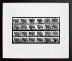 #elephant #art #photograph
