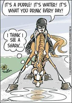 Horse humor cartoon. Horse afraid of the water puddle.