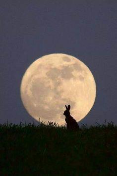 Nuit de pleine lune