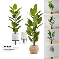 Buy best artificial plant from ArtiPlanto with wide range of faux plants, silk flower and potted plants for indoor office decor. Rooms Home Decor, Living Room Decor, Diy Home Decor, Earthy Home Decor, Plants Delivered, Chandelier In Living Room, Faux Plants, Shabby Chic Homes, New Room