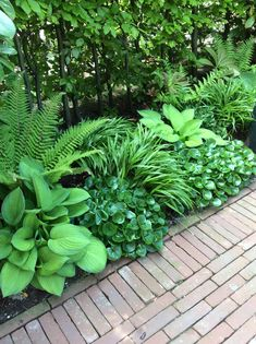 Asarum fern hakonechloa and cough Shadow border Ferns garden, Hosta gardens, Garden spaces, Garden m