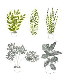 Resultado de imagem para plant  illustration tumblr