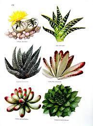Resultado de imagem para cactus print