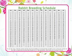 Due Date Calculator Easy Peasy Rabbit Breeding ScheduleEasy Peasy Rabbit Breeding Schedule All About Rabbits, Raising Rabbits For Meat, Meat Rabbits, Rabbit Farm, Rabbit Cages, Lionhead Rabbit, Angora Rabbit, Show Rabbits, Dwarf Rabbit