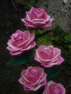Rosas Mexicanas cor de rosas