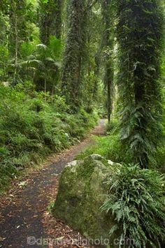 Wonga Walk, Dorrigo National Park, New South Wales, Australia England Australia, North Coast, South Wales, World Heritage Sites, Google Images, New England, Lush, Waterfall, National Parks