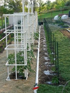 PVC tomato cage. Gonna have to try this next year seeing as the metal one just can't hold up the plants@Marcia Kishbaugh might need to raid your pile hehe