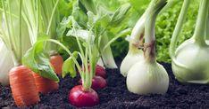 15 easiest vegetables to grow in pots for beginner gardeners - Garden Talk - NurseryLive Wikipedia