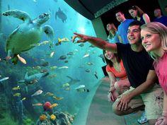 Orlando, un paraíso de los parques temáticos - http://www.absoluteeuu.com/orlando-paraiso-los-parques-tematicos/