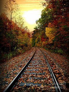 A winding railroad track is covered with fall leaves. The tree's on the side line the railroad track with colors of the season. Trains, Background Images Hd, Train Art, Autumn Scenes, Train Pictures, Ferrat, All Nature, Autumn Photography, Once In A Lifetime