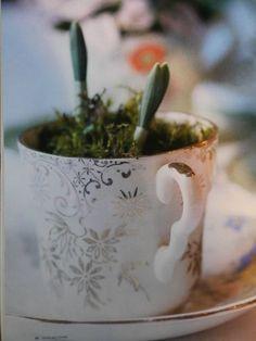 Bulbs in a cup