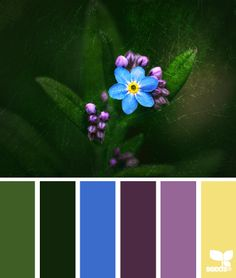 Color palette ideas. Cornflower blue with muted lavender and plum, greens, and butter yellow.