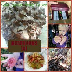 Save Green Being Green: Mushrooms 101