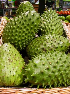 Frutos de Guanábana  deliciosos y muy benéficos en la curación del cáncer acostumbrado en tu alimentación diaria.