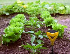 Garden gadgets that automatically water plants when they are thirsty. Garden gadgets that automatica Garden Gadgets, Garden Tools, Modern Farmer, Pinterest Garden, Smart Garden, Garden Fun, Water Valves, Organic Fertilizer, New Gadgets