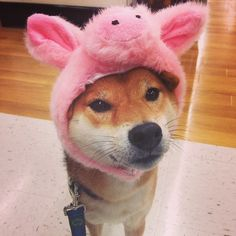 This little piggy... We're obsessed with this dog costume.