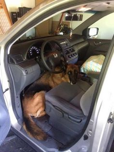 Got finished packing the car and found this waiting for me, she hates being left behind. - Imgur