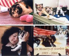 Scarlett, the heroic cat who rescued her kittens: | 14 Pictures That Prove Animals Are Better Than People