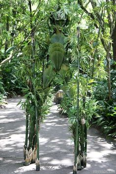 New at Animal Kingdom - Bamboo! I can't decide if this is awesome or terrifying... disney animal kingdom #disney disney animal kingdom #disney