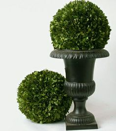 Preserved Boxwood Ball 12 Inch