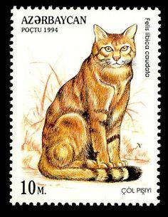 European Wildcat postage stamp