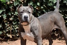 Staten Island Shelter Dogs
