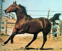 Jet Deck was the first racing quarter horse to earn over $200,000.  He was a leading sire of winners and would probably been leading alltime sire, if he had not been found dead in his stall in 1971, at 11 years old, of an overdose of barbituates.  He was inducted into the AQHA Hall of Fame in 1991.