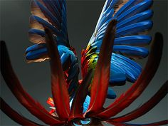 Greenwing Macaw Landing - stunning photography!