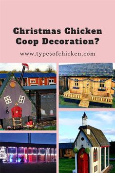 One of our members of the Facebook chicken group, Rita Brady decorated her chicken coop for Christmas. Many of you people will think this is a weird idea, but Christmas Chicken Coop Decoration is more and more trending.