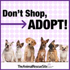 Don't shop, adopt! The Animal Rescue Site