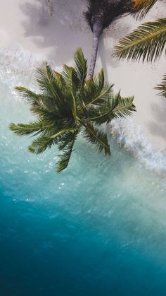 Palm Tree Beach - iPhone Wallpapers