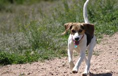 Victory! Bill That Requires Labs to Retire Cats and Dogs From Testing Passed in California!