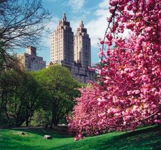 Spring in NYC. The trees and flowers in Central Park are beautiful!