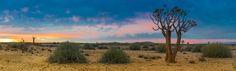 Panoramafoto van de Kalahari woestijn met kokerboom, Namibië