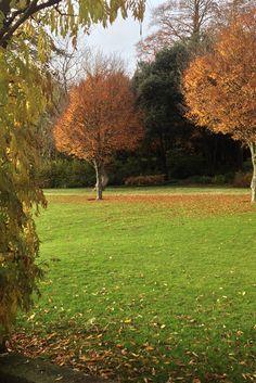 Autumn shades on the Edwardian Pergola at West Dean Gardens.