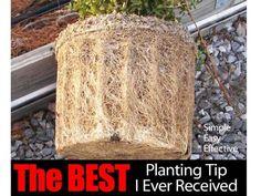 best-planting-tip-073114