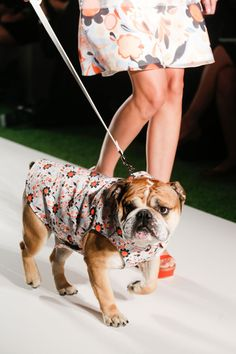 Fashion Puppy :) Mulberry Spring 2014 RTW | #LFW
