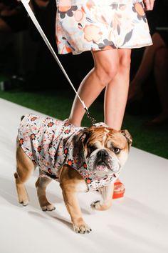 Fashion Puppy :) Mulberry Spring 2014 RTW | #LFW