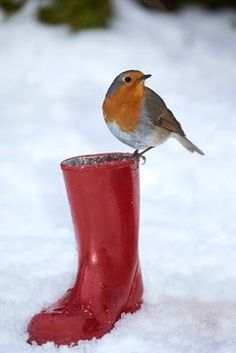I love this! Robin on a red boot