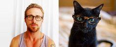 Come uomini e gatti