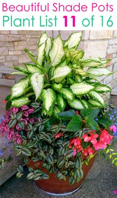 Create beautiful shade garden pots with easy shade loving plants & flowers. 16 colorful mixed container plant lists & great design ideas for shade gardens! – A Piece of Rainbow garden shade porches 16 Colorful Shade Garden Pots & Plant Lists Potted Plants For Shade, Shade Plants Container, Best Plants For Shade, Potted Plants Patio, Shade Garden Plants, Container Gardening Vegetables, Container Flowers, Outdoor Plants, Garden Pots