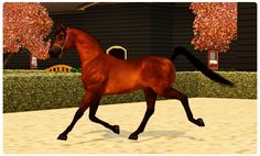 Sims 3 Horse Breeds | Endymion All-Breed Halter Show [RESULTS]
