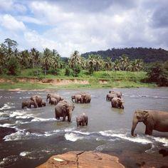 Pinnawela Elephant Orphanage in Kegalle