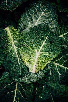 De Ommuurde tuin, blad savooiekool | savoy cabbage Savoy Cabbage, Fruits And Veggies, Raw Food Recipes, Food Styling, Fine Art, Dark, Nice, Cooking, Garden