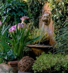 to give a small garden HUGE punch: MONTY DON'S makeover guide Small, but very effective water features are best planted simply, using green predominantl.Small, but very effective water features are best planted simply, using green predominantl. Small Courtyard Gardens, Small Courtyards, Small Gardens, Small Water Features, Water Features In The Garden, Garden Features, Home Garden Design, Small Garden Design, Garden Ideas To Make